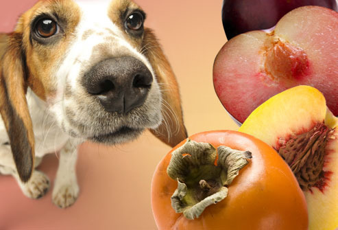 What Dogs Should Not Eat?